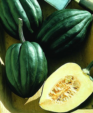 Acorn Honey Bear Squash