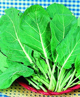 Carolina Cabbage Collard