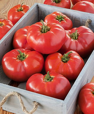Container's Choice Tomato