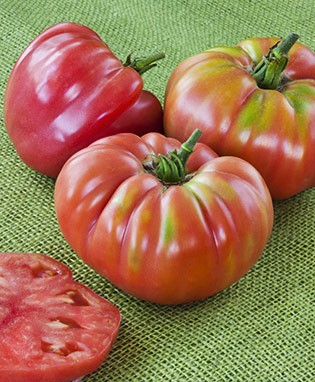 German Queen Heirloom Tomato