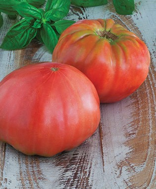 Pink Brandywine Heirloom Tomato